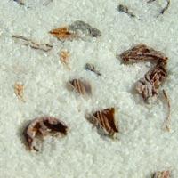 Bergamot Clary Sage - Therapeutic Minerals Body Salt