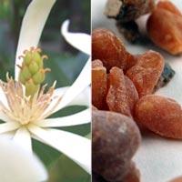 frankincense magnolia wholesale bath and body oil