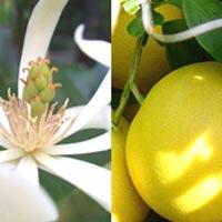 Magnolia Grapefruit Organic Skin Butter